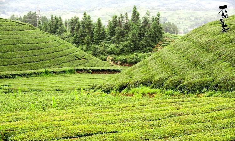 00  确认包山 山头简介 走马红茶茶山位于湖北省走马镇,茶山地区青山